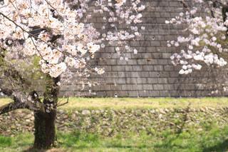 花の写真・画像素材[428093]