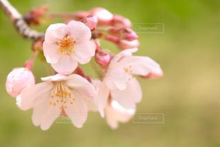 花の写真・画像素材[428096]