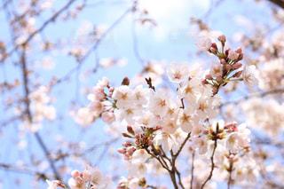 花の写真・画像素材[428099]