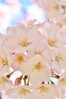 花の写真・画像素材[428104]