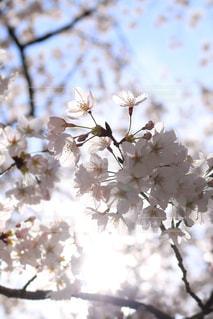 花の写真・画像素材[428120]