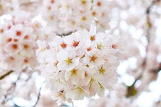 花の写真・画像素材[428123]