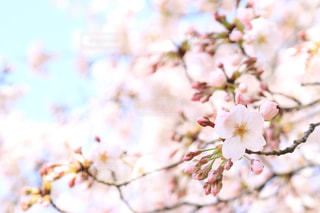 花の写真・画像素材[428125]