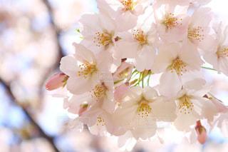 花の写真・画像素材[428129]