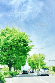 緑の写真・画像素材[464849]