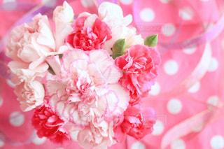 花の写真・画像素材[482731]