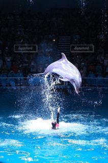 イルカの写真・画像素材[677077]