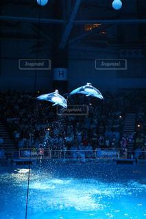 イルカの写真・画像素材[677078]