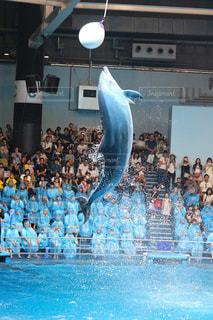 イルカの写真・画像素材[677083]
