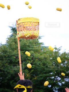 ボールにバットを振る野球選手の写真・画像素材[808168]