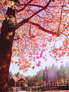 近くの木のアップの写真・画像素材[863486]