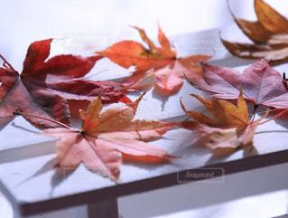 テーブルの上のピンクの花の木の写真・画像素材[880684]