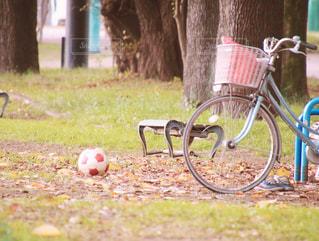 草の上自転車駐車の写真・画像素材[880712]