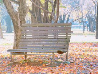 公園の真ん中に座っている木製のベンチの写真・画像素材[880713]