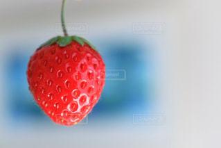 近くに赤い果実のの写真・画像素材[924707]