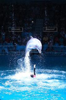 水の外に飛び出すイルカの写真・画像素材[1219782]