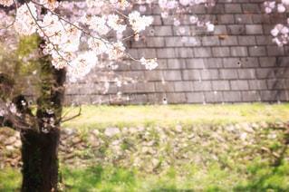 近くの木のアップの写真・画像素材[1219932]
