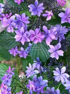 近くに紫の花のアップの写真・画像素材[1229075]