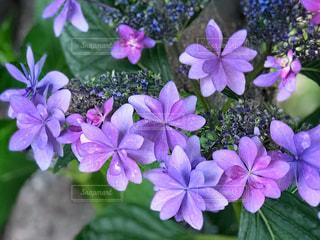 近くに紫の花のアップの写真・画像素材[1229083]