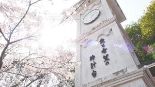 春,桜,屋外,青空,散歩,花見