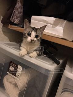 猫の写真・画像素材[438906]