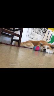 犬の写真・画像素材[647412]