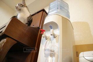 カウンターに座っている猫 - No.912611