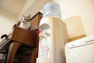 カメラにポーズを鏡の前で座っている猫 - No.912615