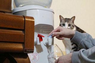 テーブルの上に座って猫の写真・画像素材[912625]
