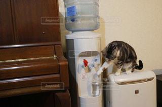 猫の隣に座っている白い冷蔵庫冷凍庫 - No.912628