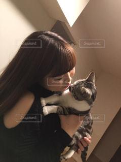 猫の写真・画像素材[1030239]