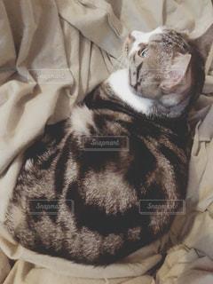 ベッドの上に座っている猫の写真・画像素材[1658929]