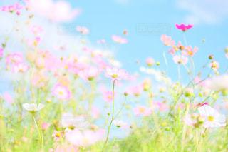 近くの花のアップの写真・画像素材[816002]