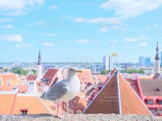 建物側に鳥の立っています。の写真・画像素材[818973]