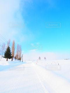 美瑛の雪道の写真・画像素材[915343]