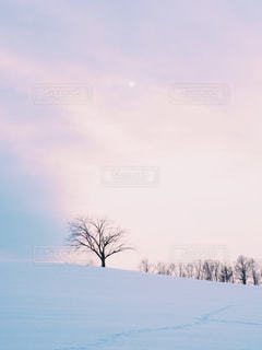 雪に覆われたフィールドの写真・画像素材[915346]