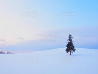 雪の日のクリスマスツリーの写真・画像素材[915347]