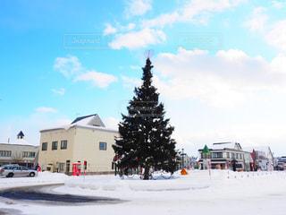 美瑛駅前のクリスマスツリーの写真・画像素材[915352]