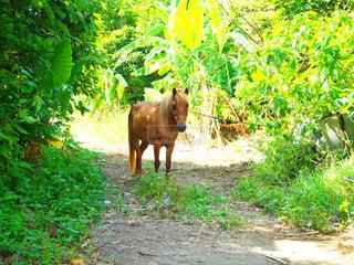 森の中にいる馬の写真・画像素材[1225546]