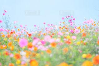 色とりどりの花のグループの写真・画像素材[1598116]