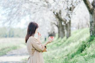 女性,春,桜,ピンク,お花見,ピクニック,お出かけ,アーモンドロカ