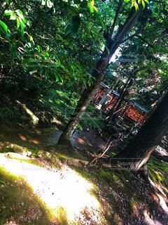 道の真ん中にツリーの写真・画像素材[1431002]