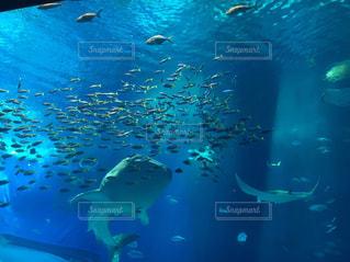 プールの水でカモメの群れの写真・画像素材[926759]