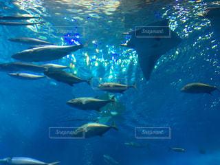 水面下を泳ぐ魚たちの写真・画像素材[926784]
