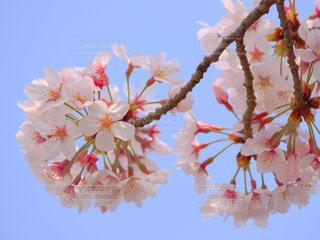 近くの花のアップの写真・画像素材[1128186]