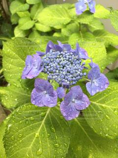 花の写真・画像素材[542407]