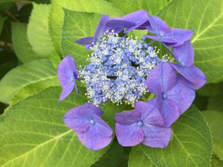 花の写真・画像素材[542408]