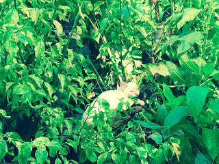 庭園の緑の植物 - No.992160