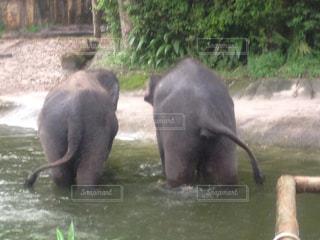 シンガポール,ゾウ,動物園,リゾート,ツーショット