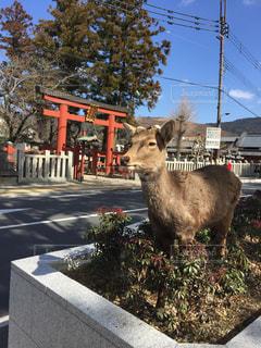 神社,観光地,鹿,奈良,奈良公園,モデルみたい,氷室神社